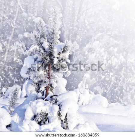 Winter Forest. - stock photo