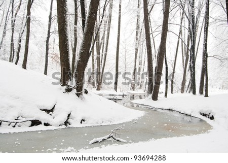 winter forest - stock photo