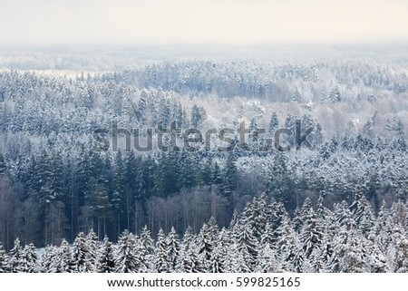 Winter forest aerial view background with fozen trees and misty air in Finland.