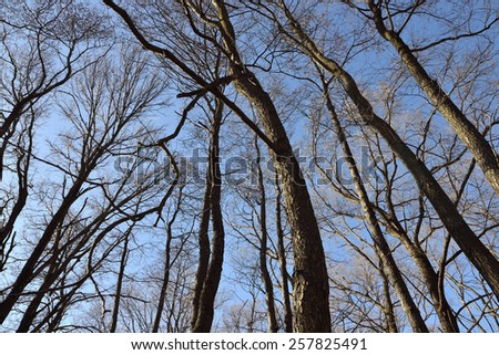 Winter forest and Blue Sky and moon - stock photo