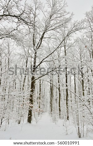 Winter forest and tree covered with snow and frost.
