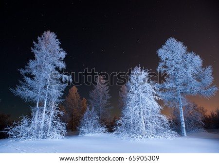 winter forest at night - stock photo