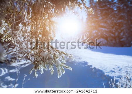 winter forest background, close up of the branch - stock photo