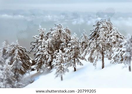 winter forest behind frozen window - stock photo
