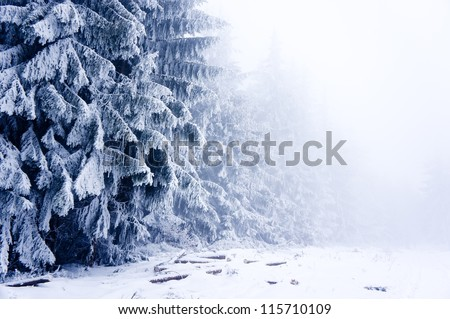 Winter forest covered by snow in mist in Cantoryja hill - stock photo