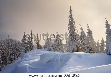 Winter forest covered with snow. New Year`s landscape. Fabulous trees in snowdrifts. Carpathian mountains, Ukraine, Europe - stock photo