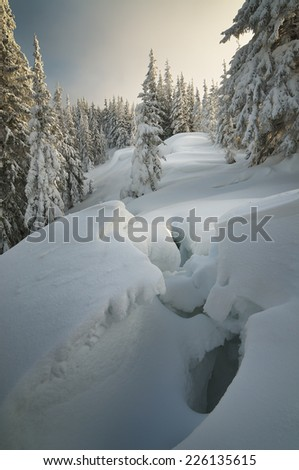 Winter forest covered with snow. New Year`s landscape. Fabulous trees in snowdrifts. Sunlight through the mist. Carpathian mountains, Ukraine, Europe - stock photo