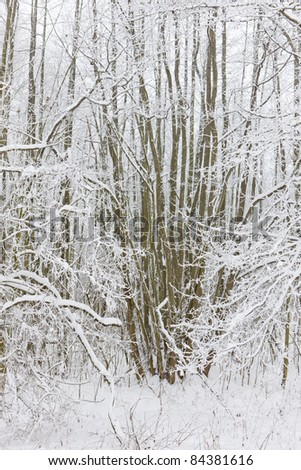 winter forest, Czech Republic - stock photo