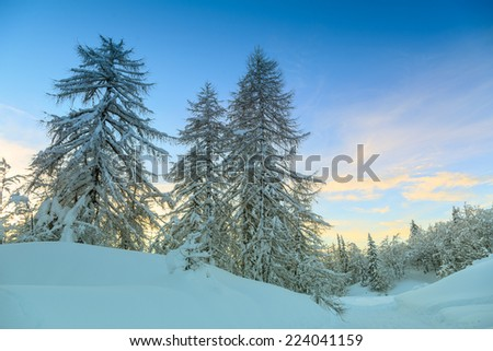 Winter forest in Alps near Vogel sky center in Slovenia, Europe.