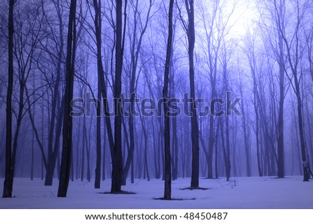 Winter forest in blue fog - stock photo