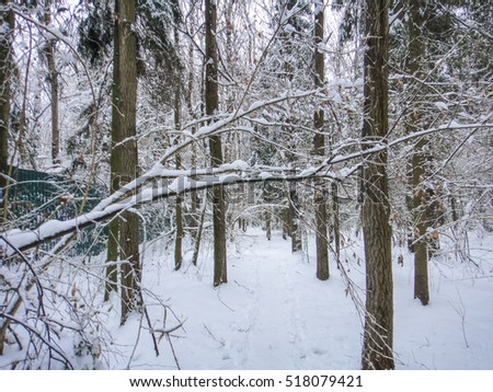 Winter forest in cold Russia