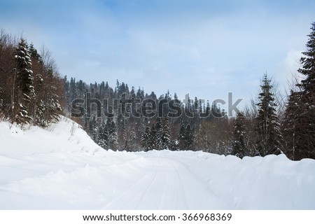 Winter forest in mountain - stock photo
