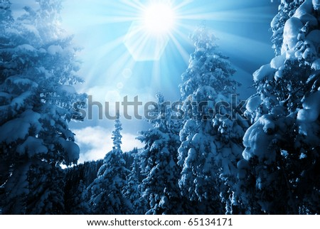 Winter forest in mountains - stock photo