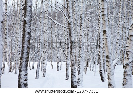 winter forest in snow - stock photo