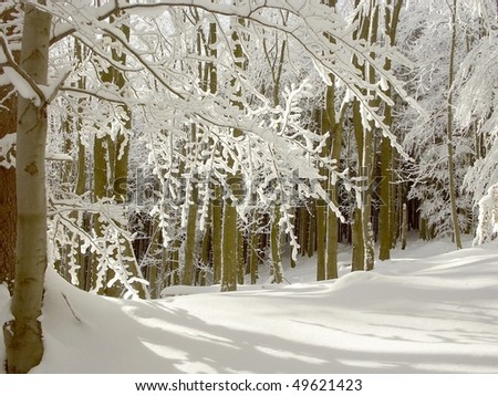 Winter forest in the morning sunlight with beech trees growing on the mountain slope. - stock photo