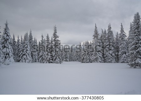 Winter forest in the mountains. Majestic winter treet. Dramatic wintry scene. Location Carpathian national park, Ukraine, Europe. Ski resort. Beauty world. Happy New Year! - stock photo