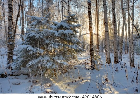 Winter forest in Ural Mountains - stock photo