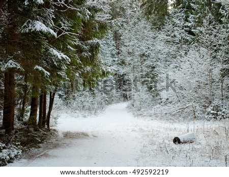 winter forest in white snow
