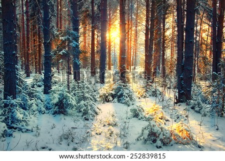 winter forest landscape sun rays - stock photo