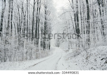 winter forest landscape with snow - stock photo