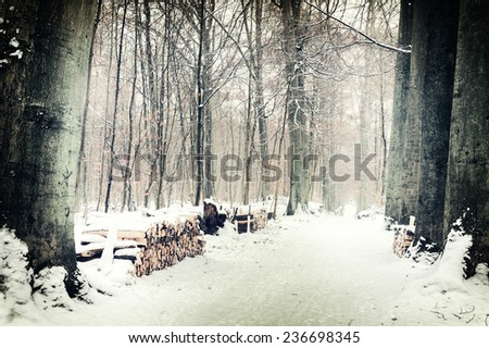 Winter forest landscape with snow covered footpath - stock photo