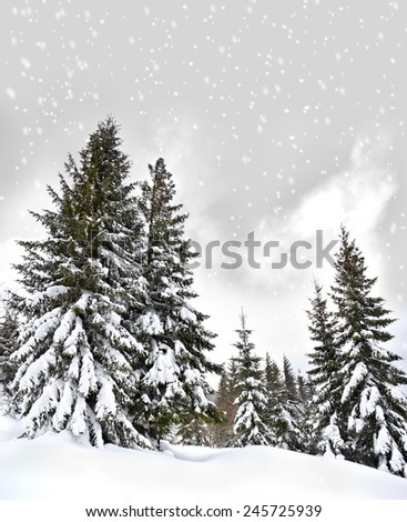 Winter forest of fir-tree - stock photo