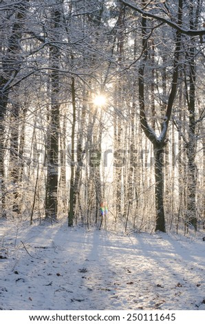 winter forest on sunny day with trees covered with snow - stock photo