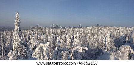 Winter forest panorama, snow covered trees - stock photo