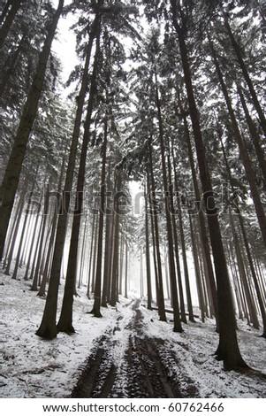 Winter forest road in fog - bleak - stock photo