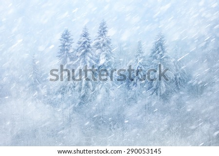 Winter forest scene with snowfall. Beautiful heavy snowfall forest landscape background. - stock photo