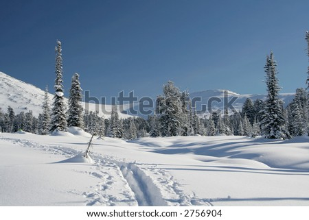 winter forest. snow ski-track. pine trees. snowdrifts - stock photo