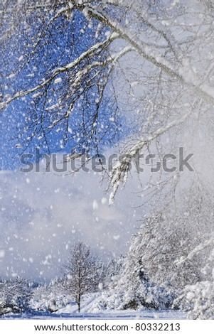 winter forest snowing background - stock photo
