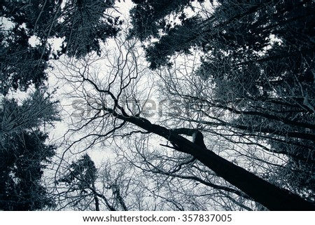 winter forest spruce
