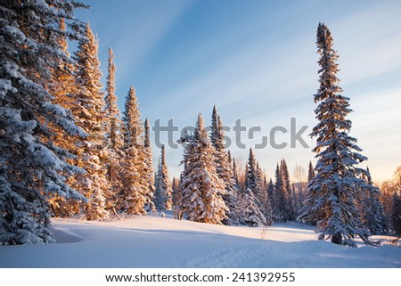 winter forest sunset - stock photo