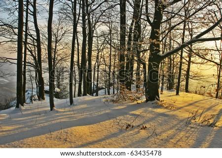 Winter forest sunset light - stock photo