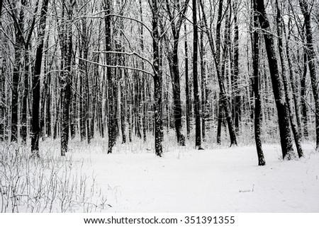 winter forest trees. nature snow wood backgrounds. - stock photo