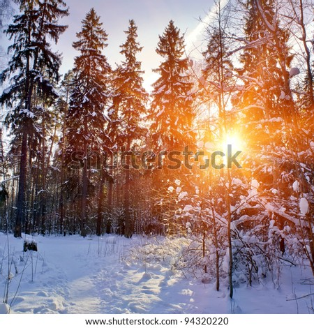 Winter forest under snow in sunny day - stock photo