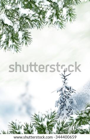 Winter Forest. Winter landscape. - stock photo