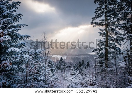 Winter forest with beautiful sunbeams on the sky