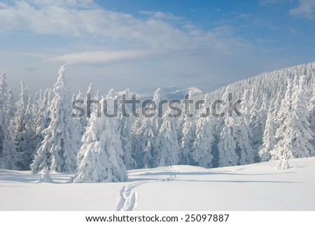 Winter forest with blue cloudy sky and ski-track on foreground. - stock photo