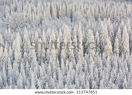 Winter forest with frosty trees, aerial view. Kuopio, Finland - stock photo