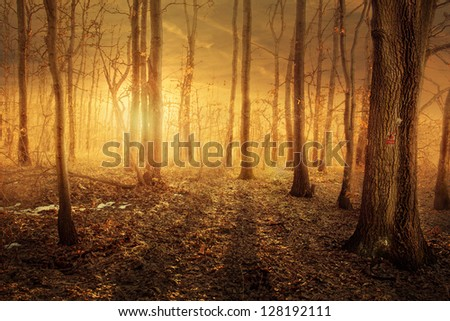 Winter forest with magical sunset light - stock photo