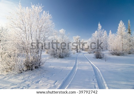 Winter forest with road - stock photo
