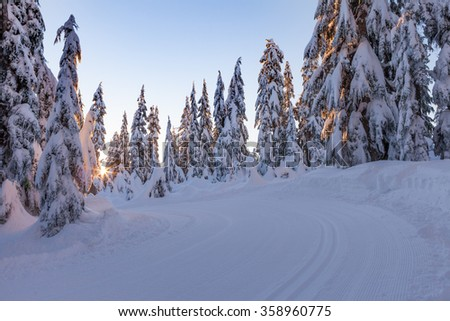 Winter Forested Mountain Landscape