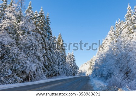 Winter Forested Mountain Road