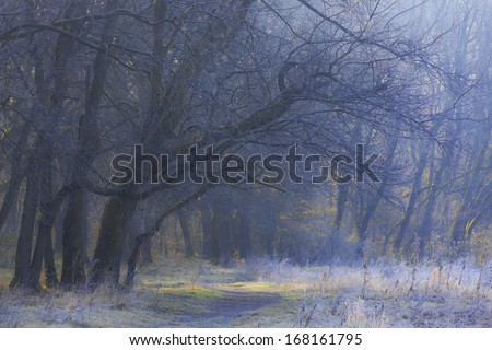 Winter frost and morning mist in the forest in December - stock photo