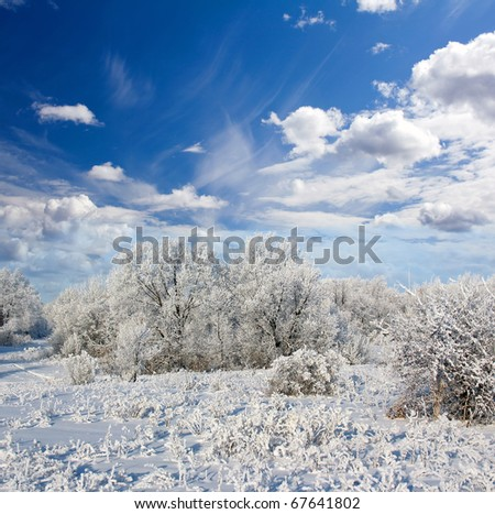 Winter frost in the wild forest. Deep wilderness nature - stock photo
