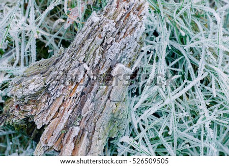 Winter frost on bark and grass. Landscape