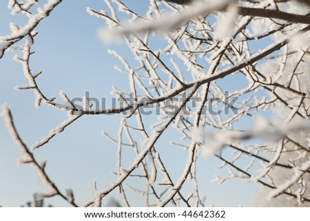Winter frost on tree branches full frame close-up - stock photo