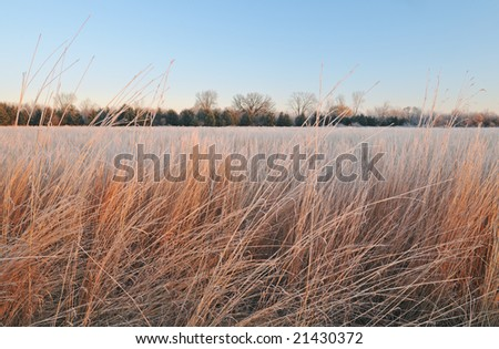 Winter, frosted tall grass prairie at sunrise, Fort Custer Recreation Area, Michigan, USA